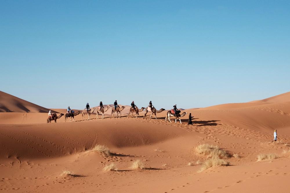 На верблюдах далеко не уедешь, или на чем передвигаться в Египте