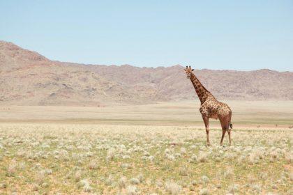 Мы идем: 5 лучших мест для сафари в Африке