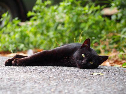 Тасиро (田代島) — японский остров, всецело принадлежащий кошкам.