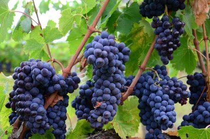 Италия: винные маршруты