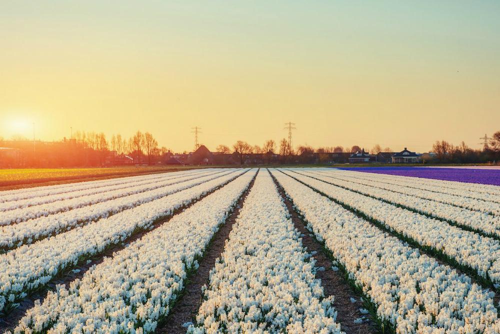 Глоток свежего воздуха: 5 цветочных регионов