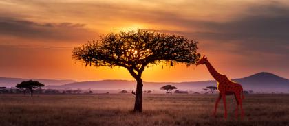 Топ-10 национальных парков Африки