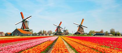 В Голландии выпустили памятку, как правильно делать селфи с тюльпанами