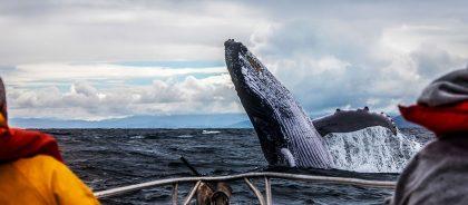 В Шотландии появился маршрут по наблюдению за китами