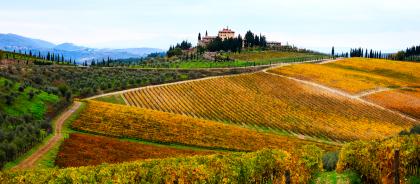 Названы лучшие страны для любителей вина