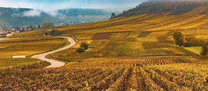Французские винодельни борются с воришками