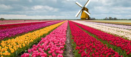 Лучшие цветочные маршруты мира