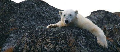 В Якутии появится заповедник «Медвежьи острова»