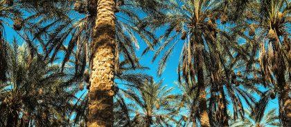 Тунис ждёт российских путешественников: на каких условиях можно попасть в страну