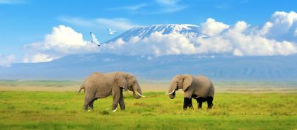 Национальный парк Килиманджаро: что посмотреть