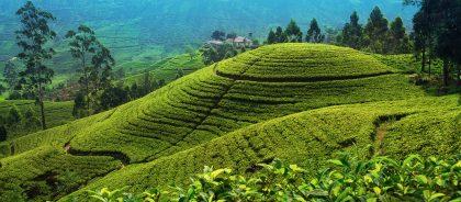 На Шри-Ланке снова можно получить визу по прибытии